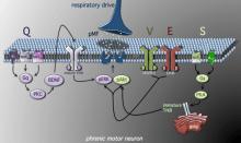 plasticity pathway